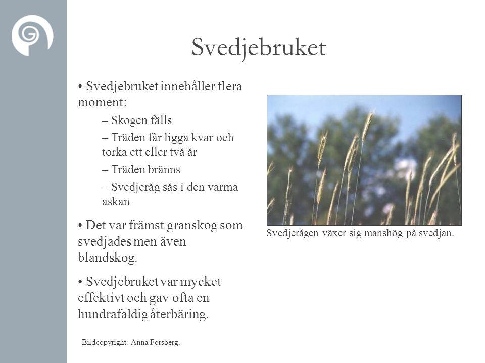 Svedjebruket Svedjebruket innehåller flera moment: