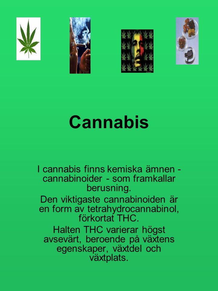 Cannabis I cannabis finns kemiska ämnen - cannabinoider - som framkallar berusning.