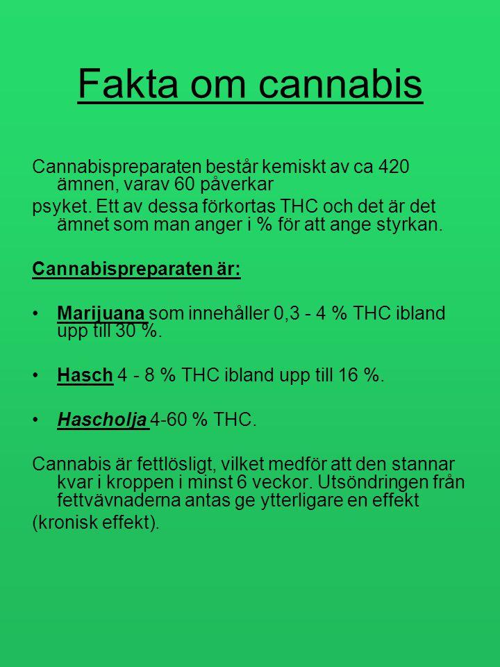 Fakta om cannabis Cannabispreparaten består kemiskt av ca 420 ämnen, varav 60 påverkar.