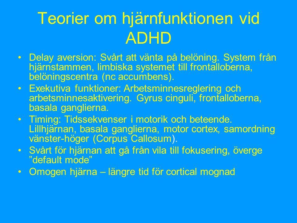 Teorier om hjärnfunktionen vid ADHD