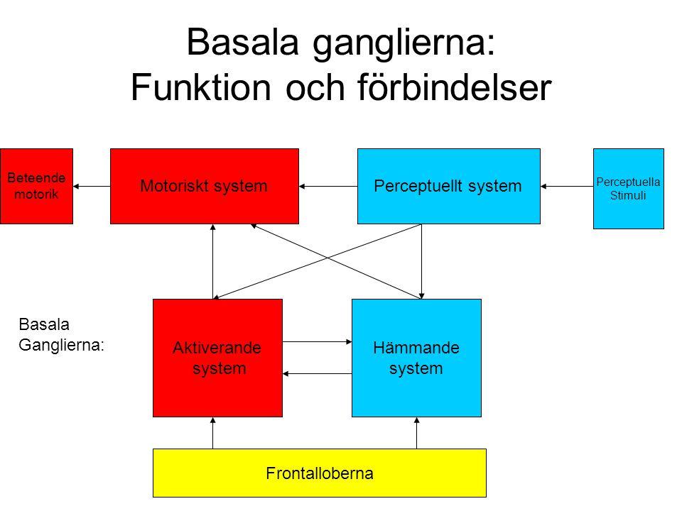 Basala ganglierna: Funktion och förbindelser