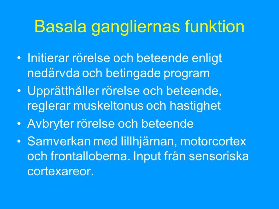 Basala gangliernas funktion