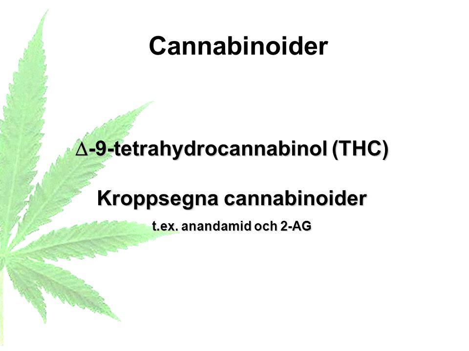 -9-tetrahydrocannabinol (THC) Kroppsegna cannabinoider