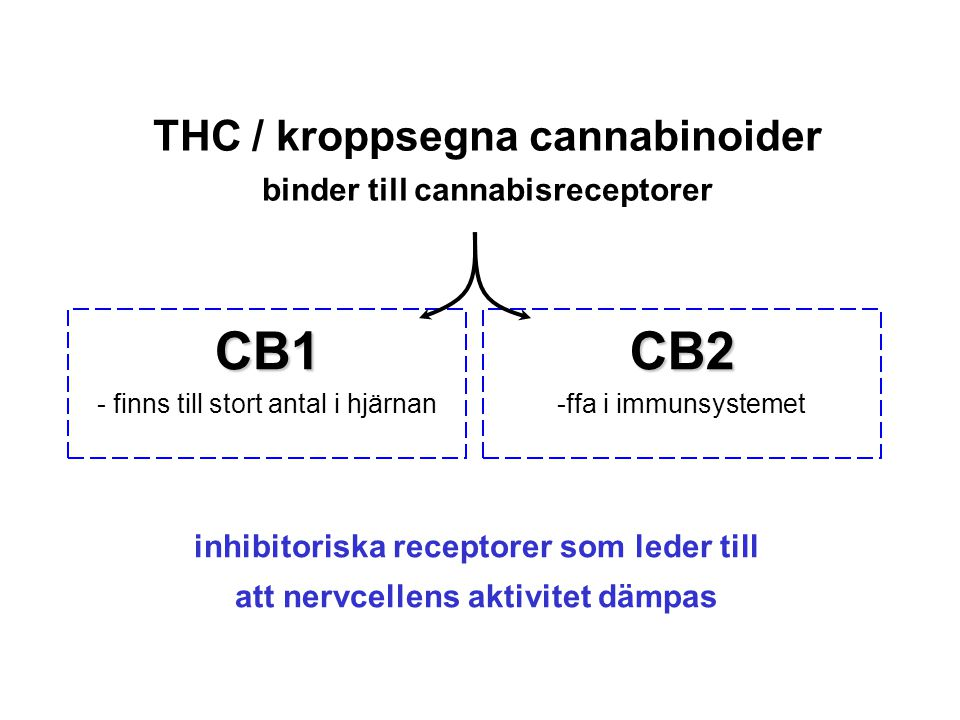 THC / kroppsegna cannabinoider binder till cannabisreceptorer