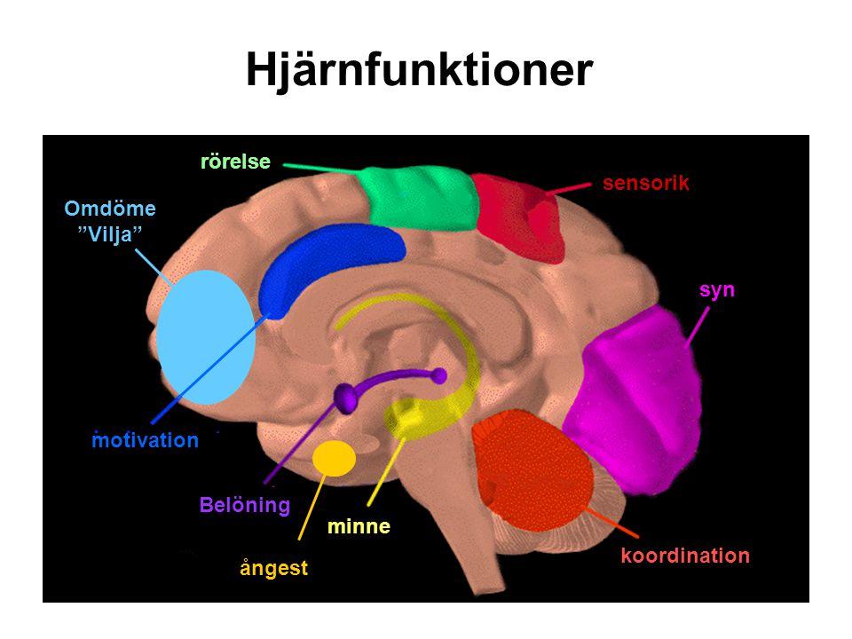 Hjärnfunktioner rörelse sensorik Omdöme Vilja syn motivation