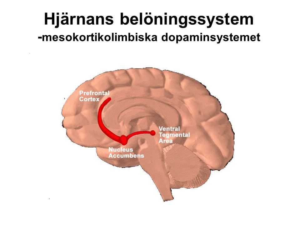 Hjärnans belöningssystem -mesokortikolimbiska dopaminsystemet