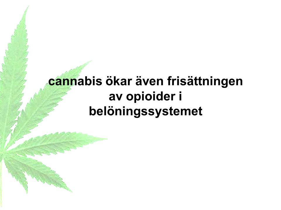 cannabis ökar även frisättningen