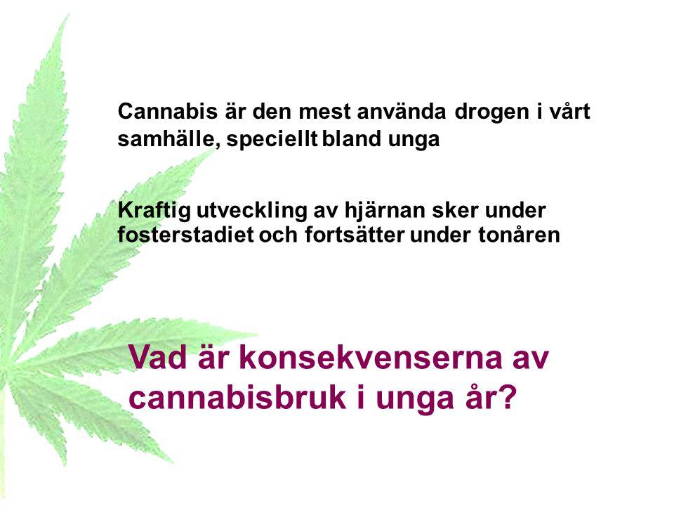 Vad är konsekvenserna av cannabisbruk i unga år