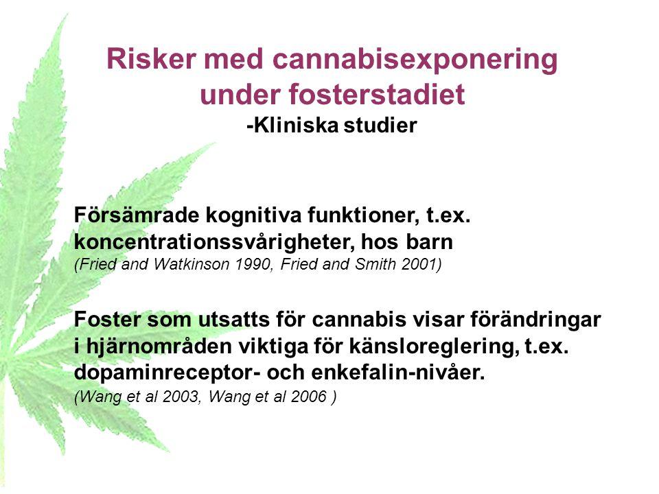 Risker med cannabisexponering under fosterstadiet