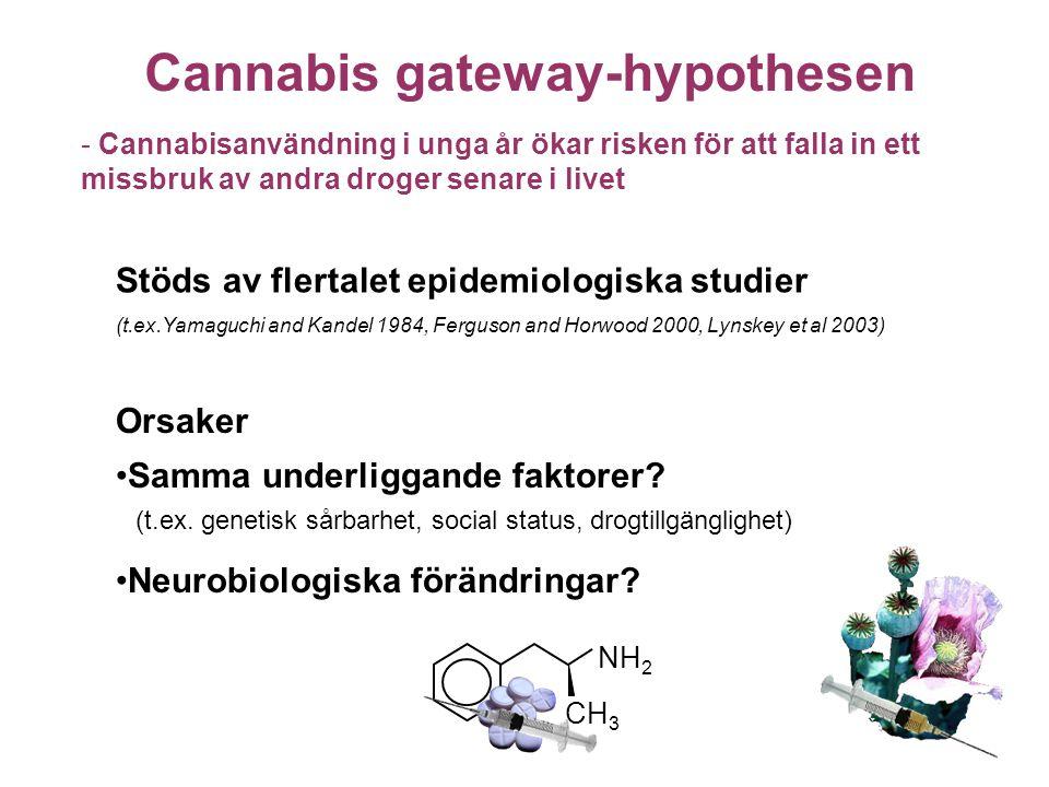 Cannabis gateway-hypothesen