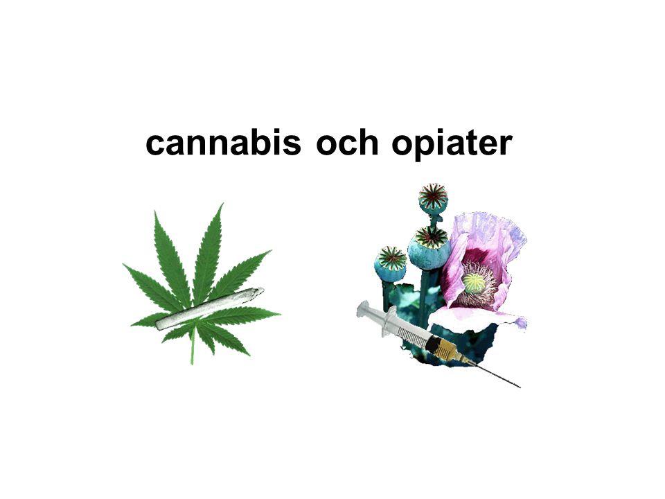 cannabis och opiater Från Opievallmon utvinns från blomkapsel