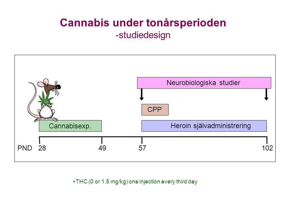 Cannabis under tonårsperioden