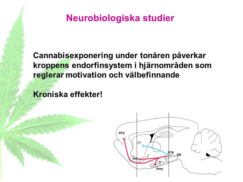 Neurobiologiska studier