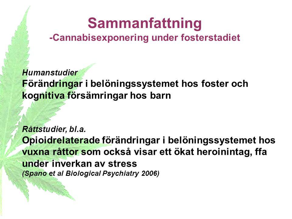 Sammanfattning -Cannabisexponering under fosterstadiet