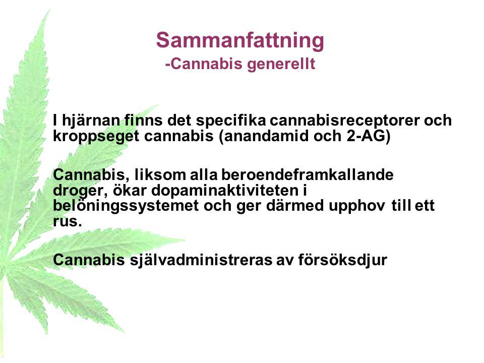 Sammanfattning -Cannabis generellt