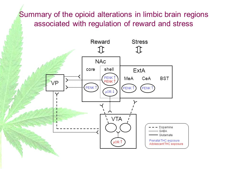 Summary of the opioid alterations in limbic brain regions associated with regulation of reward and stress