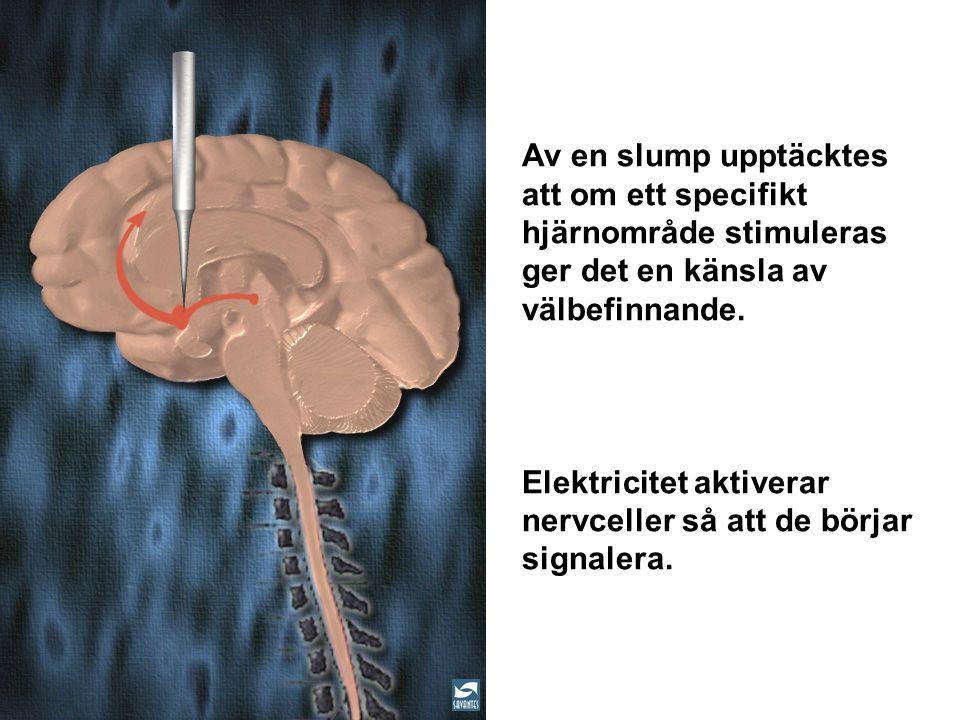 Elektricitet aktiverar nervceller så att de börjar signalera.