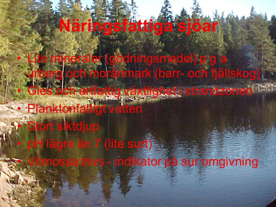 Näringsfattiga sjöar Lite mineraler (gödningsmedel) p g a urberg och moränmark (barr- och fjällskog)