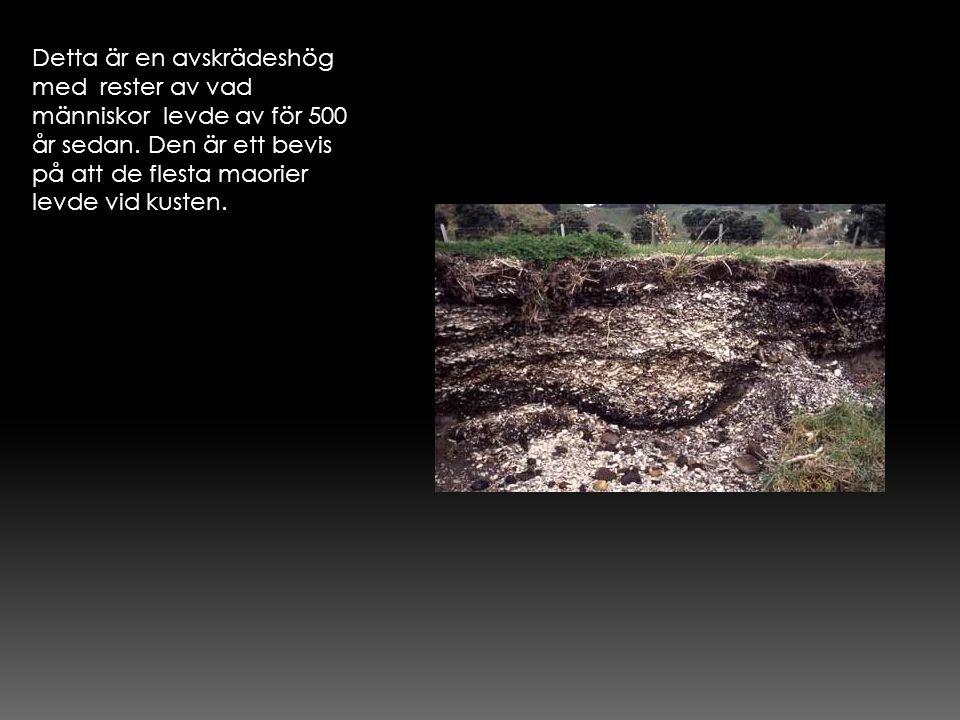 Detta är en avskrädeshög med rester av vad människor levde av för 500 år sedan.