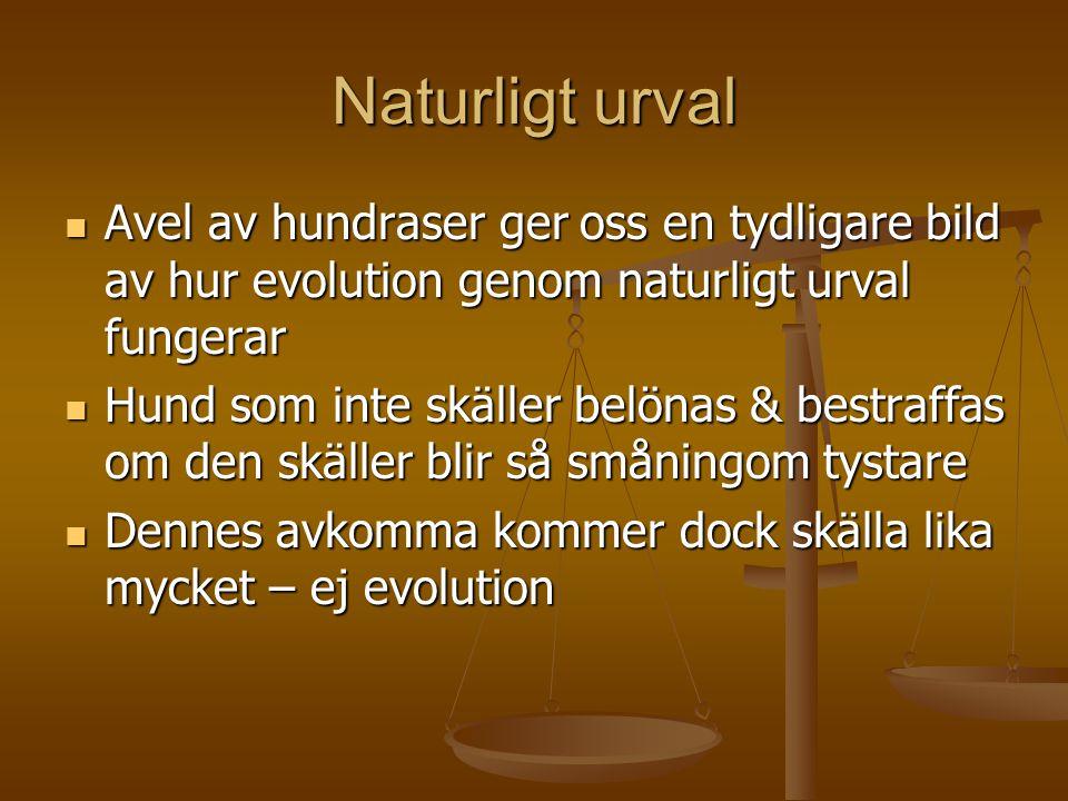 Naturligt urval Avel av hundraser ger oss en tydligare bild av hur evolution genom naturligt urval fungerar.