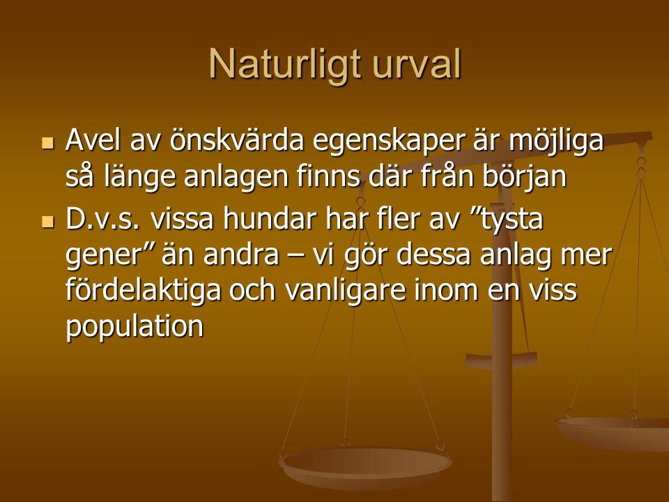 Naturligt urval Avel av önskvärda egenskaper är möjliga så länge anlagen finns där från början.