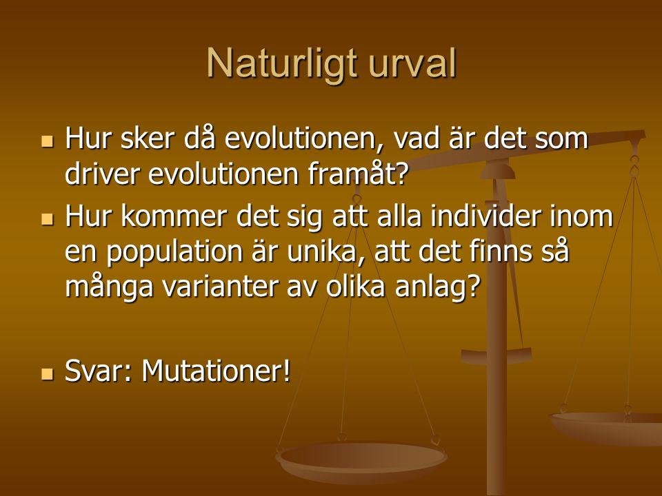 Naturligt urval Hur sker då evolutionen, vad är det som driver evolutionen framåt