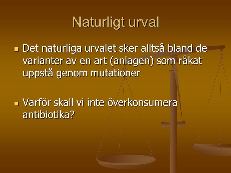 Naturligt urval Det naturliga urvalet sker alltså bland de varianter av en art (anlagen) som råkat uppstå genom mutationer.