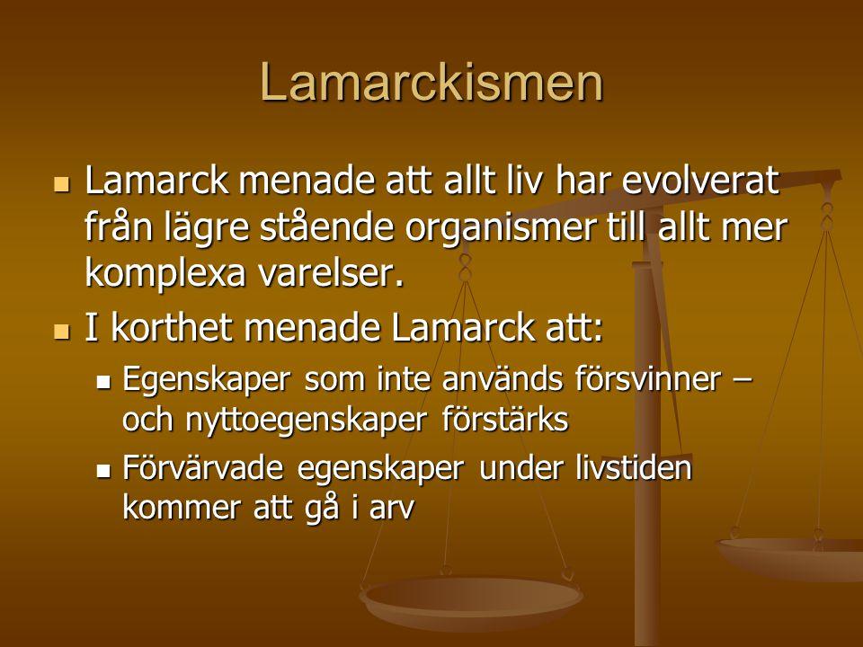 Lamarckismen Lamarck menade att allt liv har evolverat från lägre stående organismer till allt mer komplexa varelser.