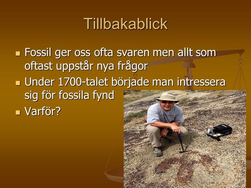 Tillbakablick Fossil ger oss ofta svaren men allt som oftast uppstår nya frågor. Under 1700-talet började man intressera sig för fossila fynd.