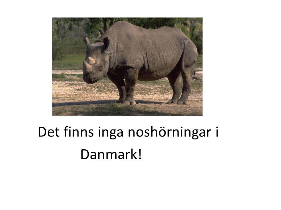 Det finns inga noshörningar i