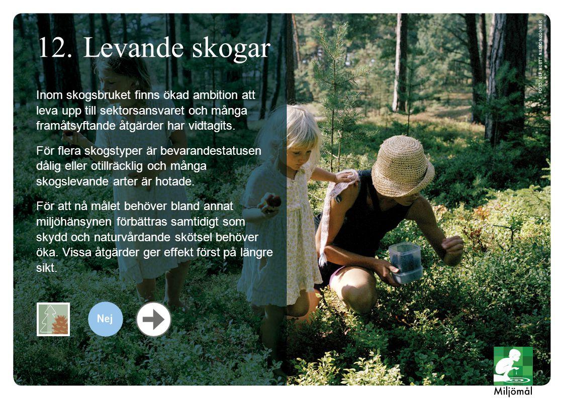 Levande skogar foto: Ulf Huett Nilsson/JOHNER.