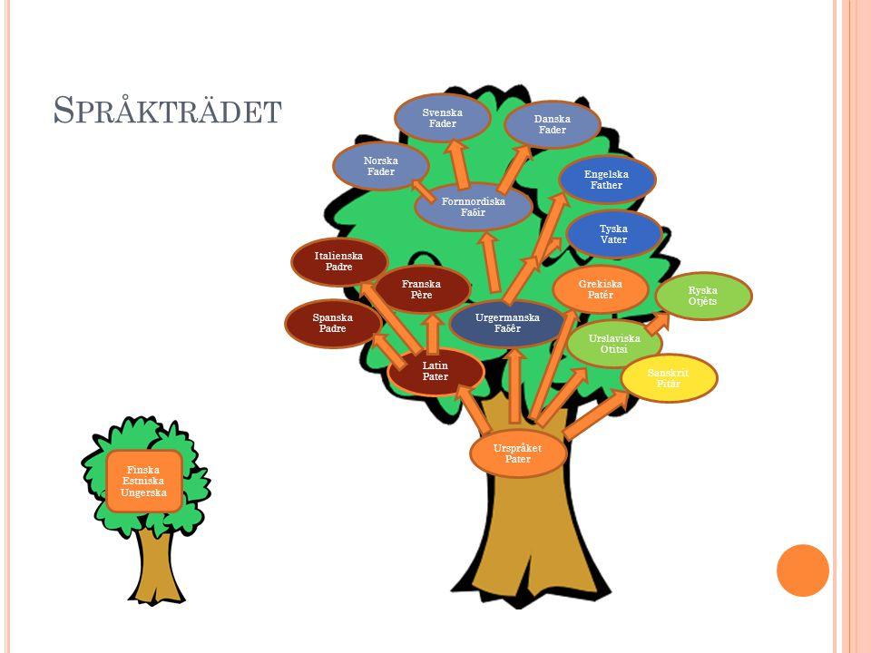Språkträdet Svenska Fader Danska Fader Norska Fader Engelska Father