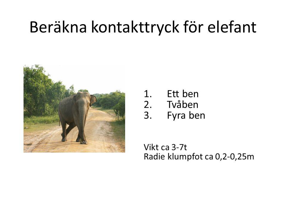 Beräkna kontakttryck för elefant