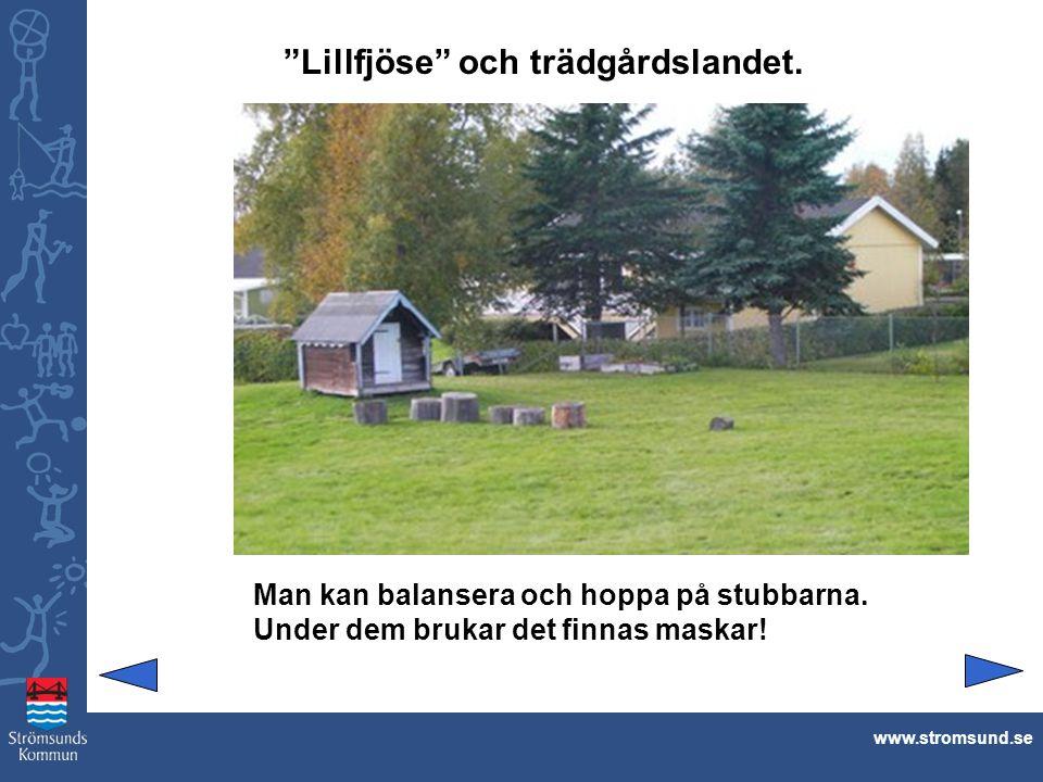 Lillfjöse och trädgårdslandet.