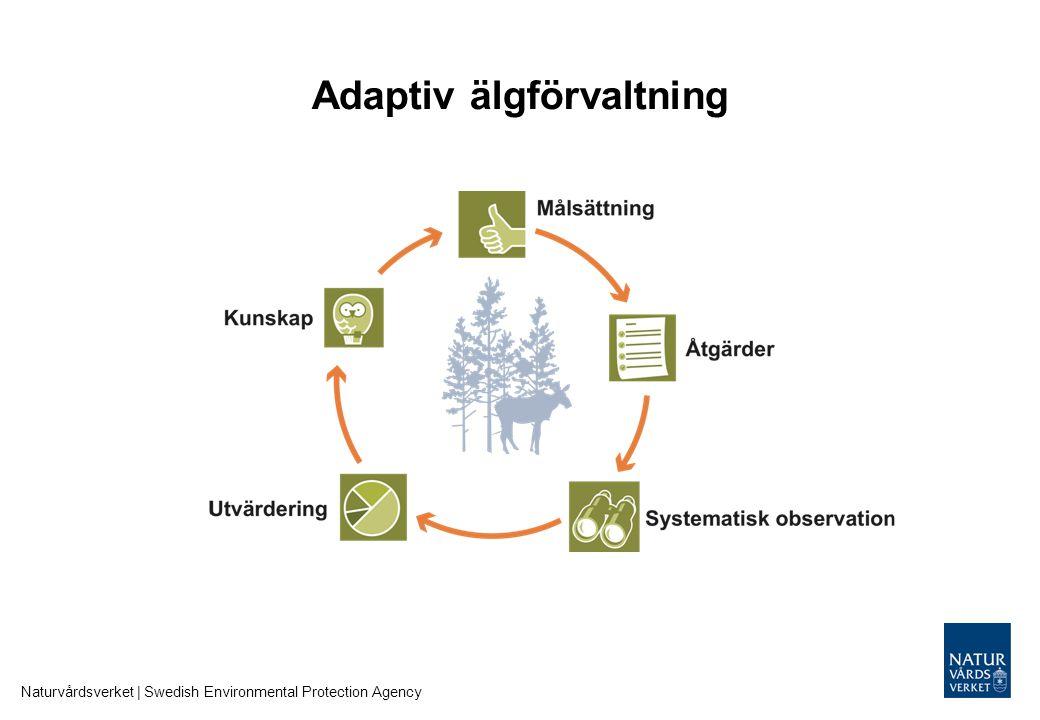 Adaptiv älgförvaltning