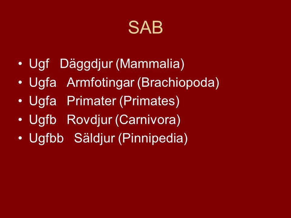 SAB Ugf Däggdjur (Mammalia) Ugfa Armfotingar (Brachiopoda)