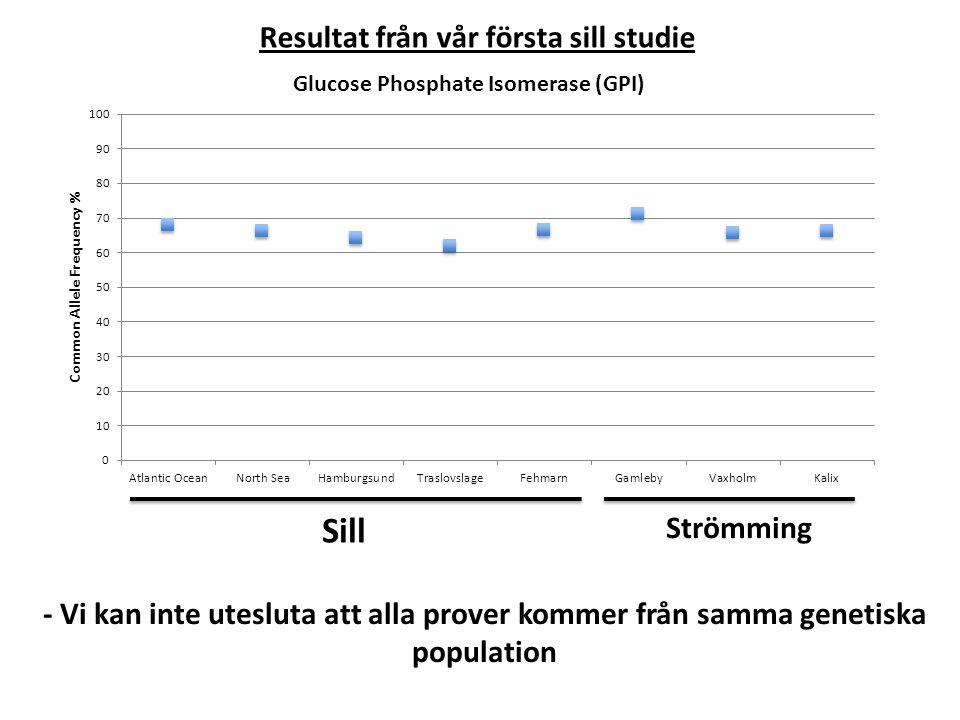 Resultat från vår första sill studie