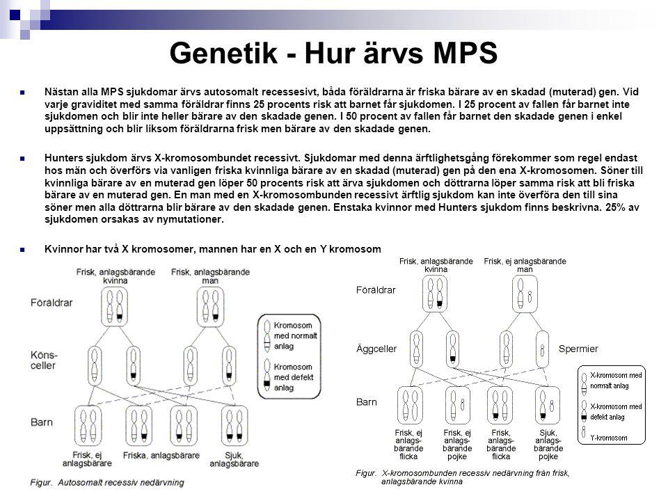 Genetik - Hur ärvs MPS