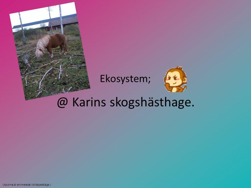 @ Karins skogshästhage.