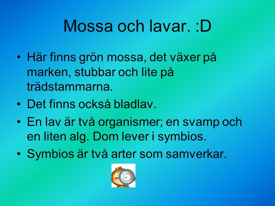 Mossa och lavar. :D Här finns grön mossa, det växer på marken, stubbar och lite på trädstammarna. Det finns också bladlav.
