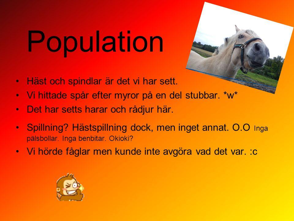 Population Häst och spindlar är det vi har sett.