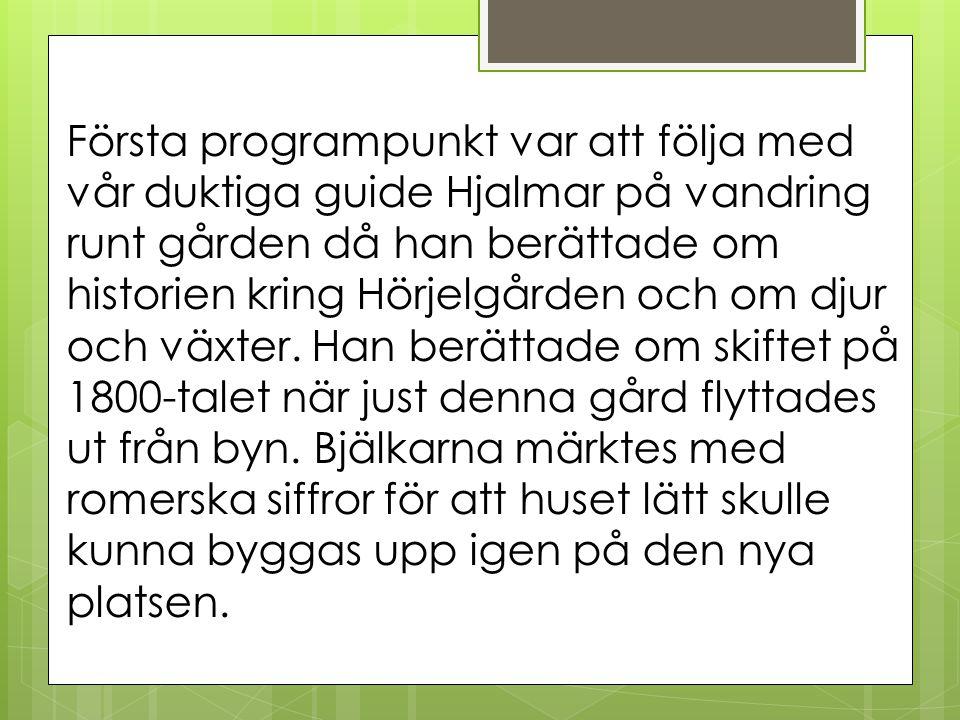 Första programpunkt var att följa med vår duktiga guide Hjalmar på vandring runt gården då han berättade om historien kring Hörjelgården och om djur och växter.