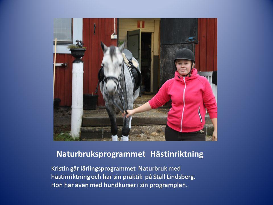 Naturbruksprogrammet Hästinriktning