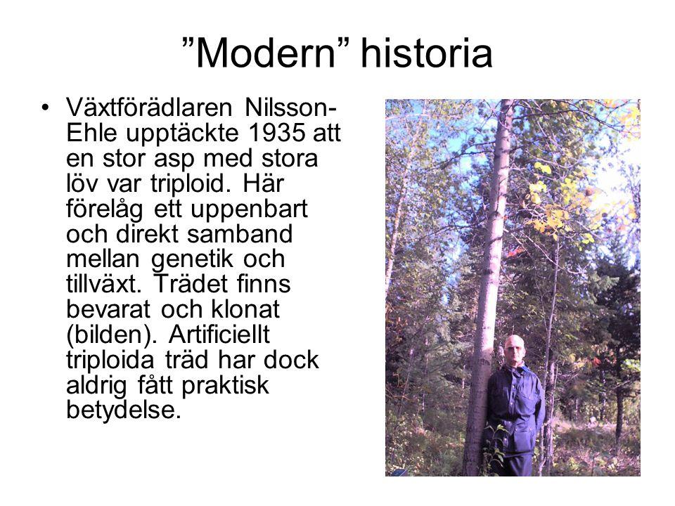 Modern historia