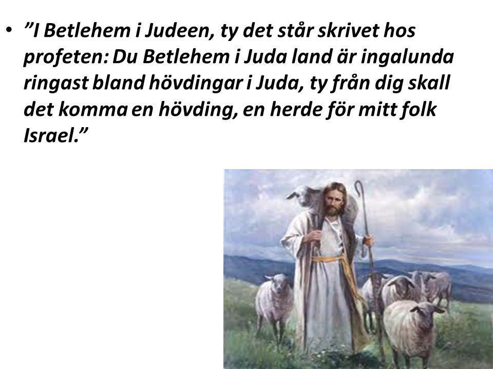 I Betlehem i Judeen, ty det står skrivet hos profeten: Du Betlehem i Juda land är ingalunda ringast bland hövdingar i Juda, ty från dig skall det komma en hövding, en herde för mitt folk Israel.