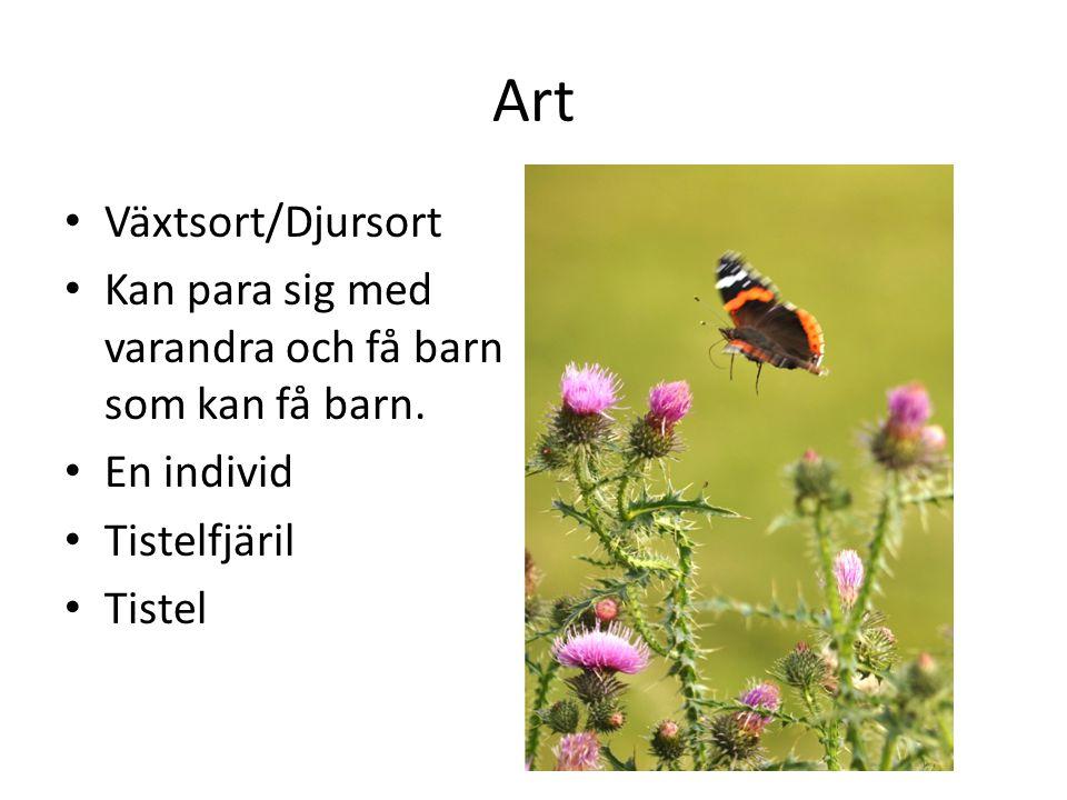 Art Växtsort/Djursort