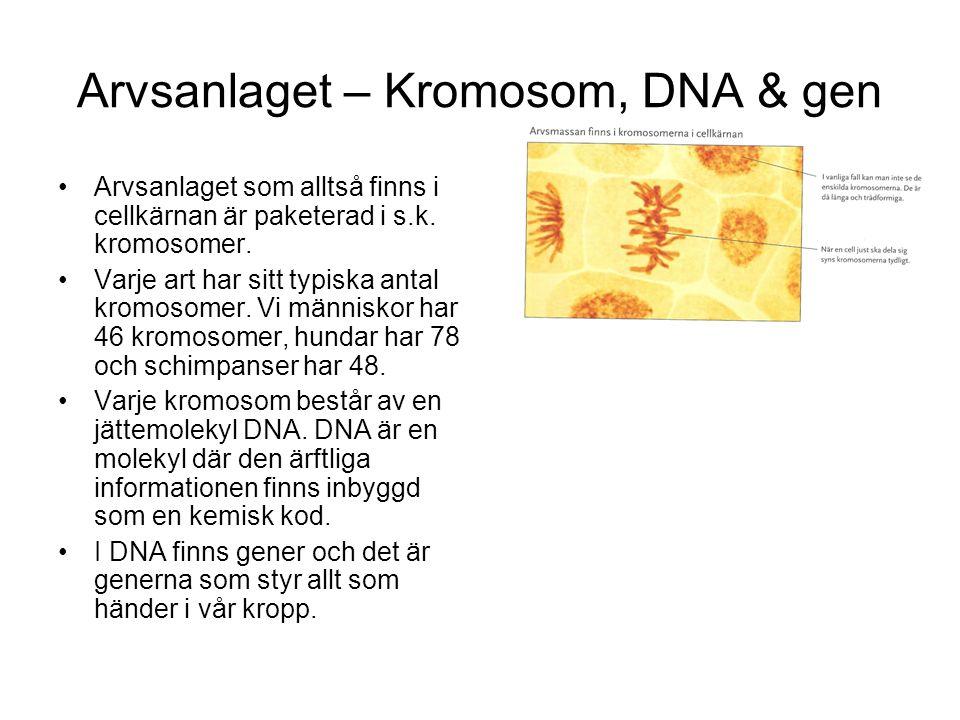 Arvsanlaget – Kromosom, DNA & gen