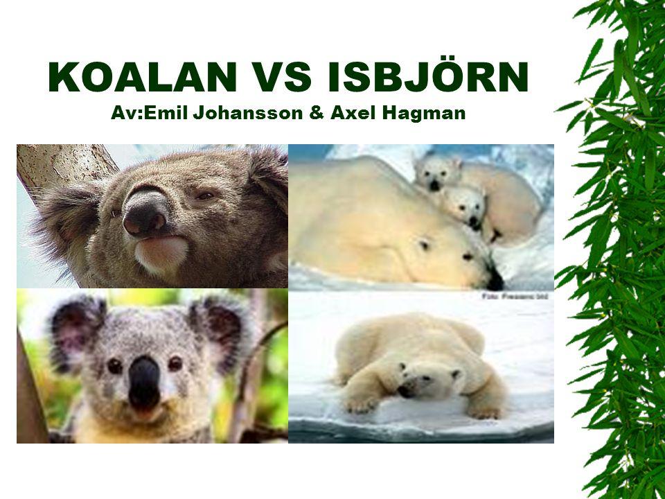KOALAN VS ISBJÖRN Av:Emil Johansson & Axel Hagman