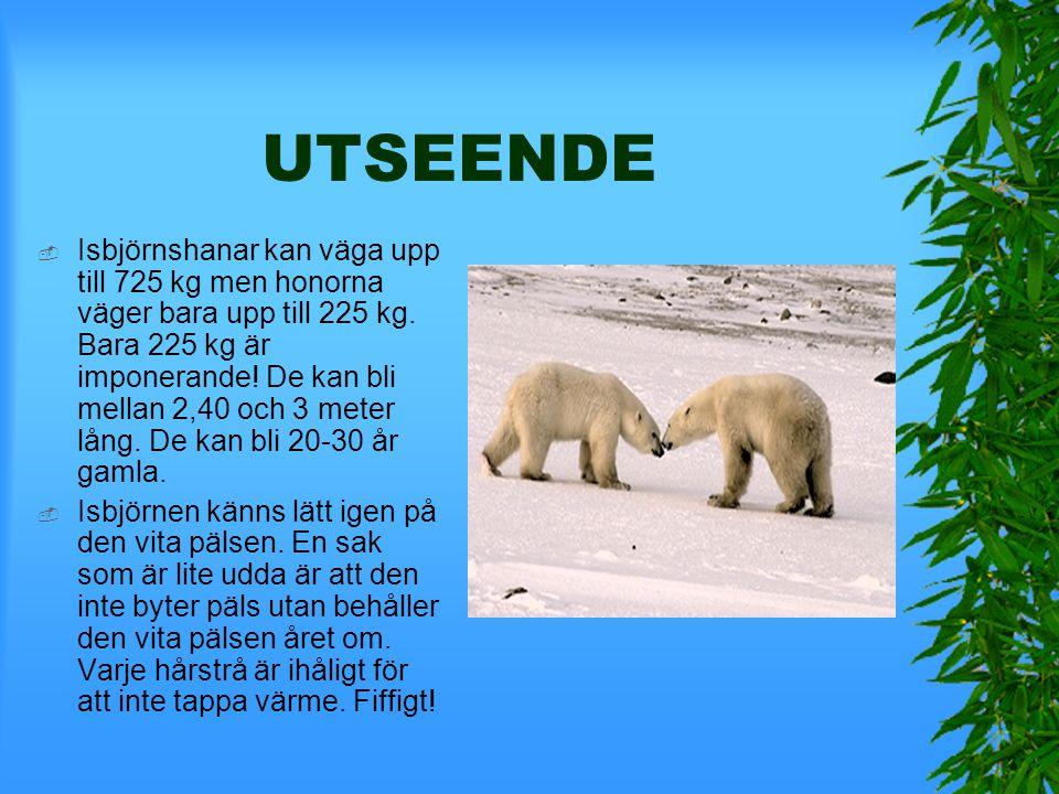 UTSEENDE