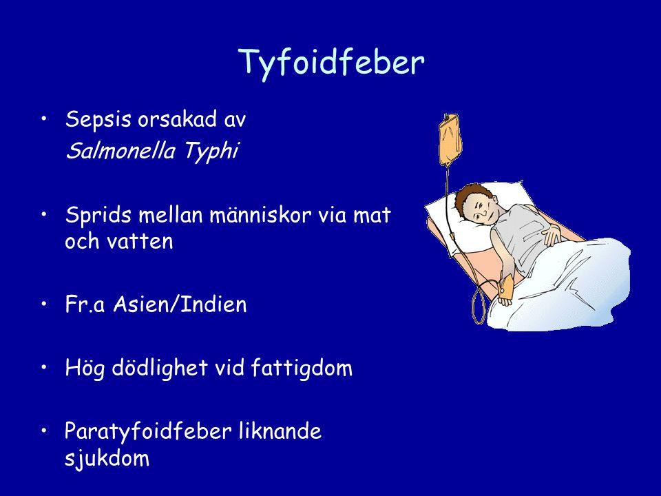 Tyfoidfeber Sepsis orsakad av Salmonella Typhi